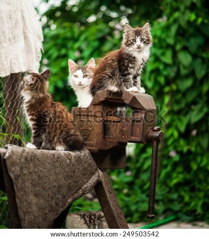 Cute little kittens.  - stock photo