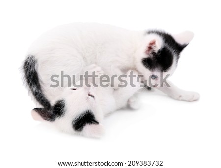 Cute little kittens, isolated on white