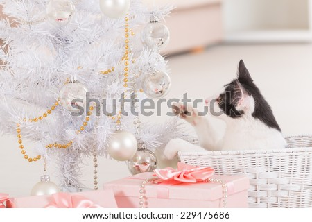 Cute little Little cat sitting with Christmas gifts and playing with Christmas tree ornaments - stock photo