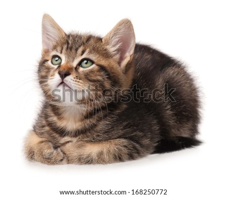 Cute little lying kitten over white background cutout