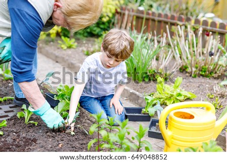 cute little preschool kid boy and grandmother planting green salad in spring happy blond child
