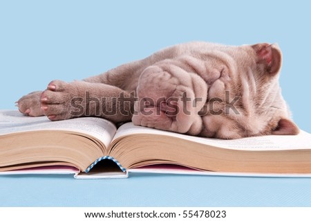 cute little puppy asleep over a book of fairy-tales - stock photo