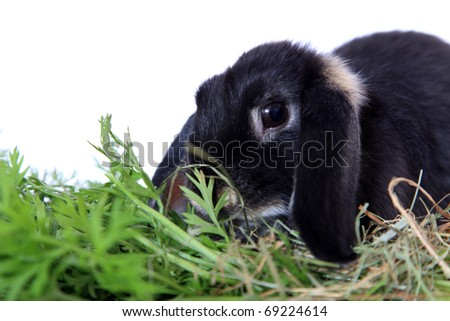 Cute little rabbit. All on white background.