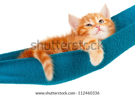 Cute little red kitten in a hammock  isolated on white background - stock photo