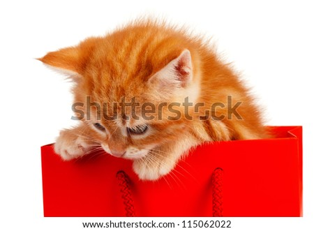 Cute little red kitten in a shopping bag isolated on white background