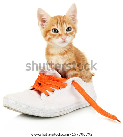 Cute little red kitten in shoes isolated on white - stock photo