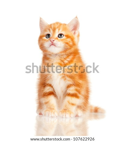Cute little red kitten isolated on white background - stock photo