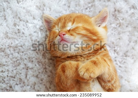 Cute little red kitten sleeps on fur white blanket - stock photo