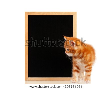 Cute little red kitten with a blackboard isolated on white background - stock photo