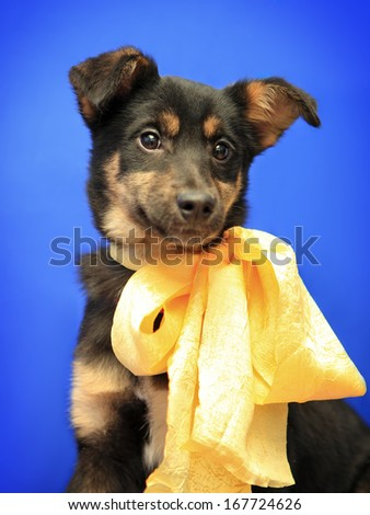 Cute little smiling dog with yellow bow
