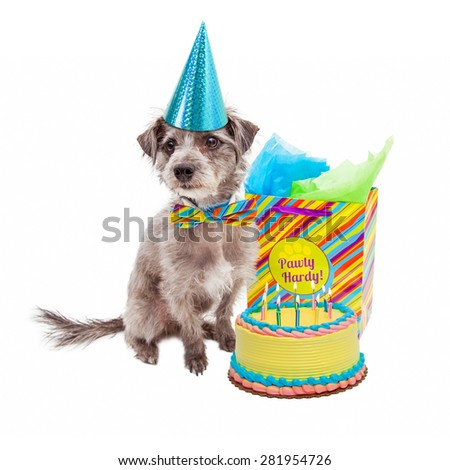 Cute little terrier dog wearing a birthday hat sitting next to a cake and gift bag - stock photo
