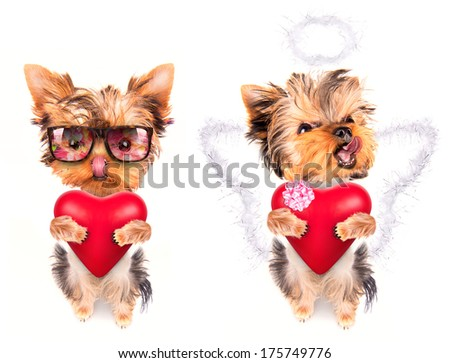 cute lover valentine puppy dog with a red heart isolated on white background