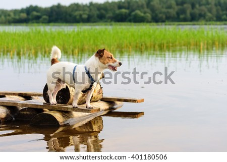 Cute loyal dog standing on a pier and waiting for owner - stock photo