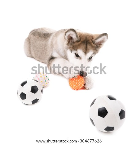 Cute Malamute puppy playing with rubber balls isolated on white