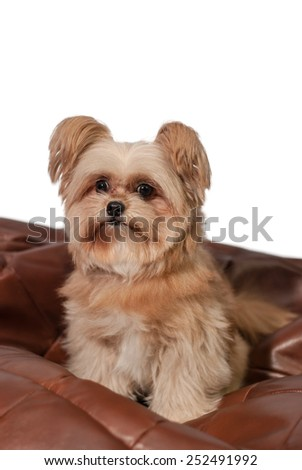 cute mixed breed dog get excited sitting in leather pad - stock photo