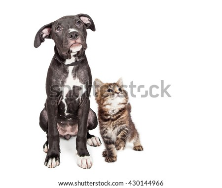 Cute mixed breed puppy and playful kitten together on white with copy space - stock photo