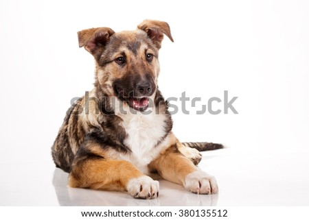 Cute mixed breed puppy on white isolated background smiling