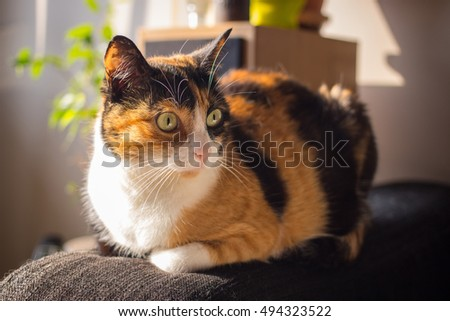Cute morning home cat