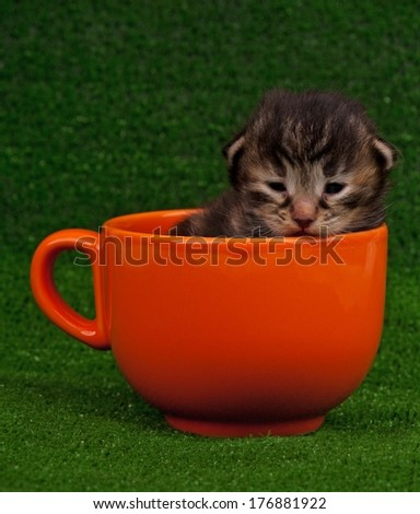 Cute newborn kitten in the orange cup over green background - stock photo