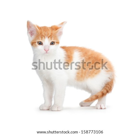 Cute orange and white kitten isolated on white. - stock photo