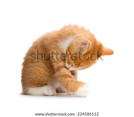 Cute Orange Kitten Bathing Isolated on White Background - stock photo