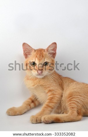 Cute orange kitten on a white background.