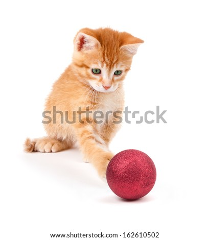 Cute orange kitten playing with a red Christmas ball ornament isolated on a white background. - stock photo