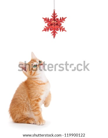 Cute orange kitten playing with a red Christmas ornament on a pure white background.