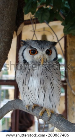 Cute Owl on the branch - stock photo