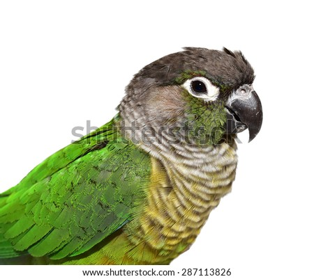 Cute parrot isolated on white