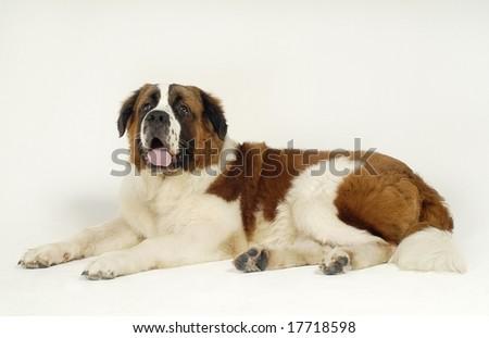 Cute Pet Animal - stock photo