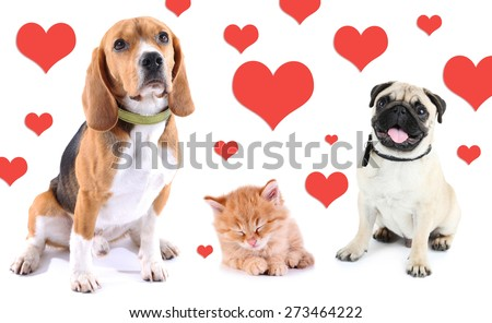 Cute pets on light background with hearts - stock photo