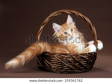 Cute playful kitten sitting in a basket - stock photo