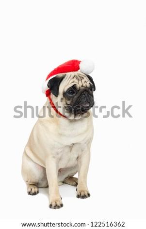 Cute pug wearing a red Santa Hat - stock photo