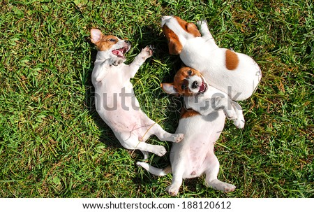 Cute puppies playing outdoors - stock photo