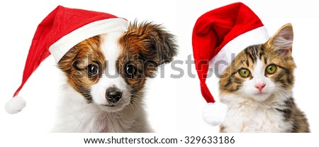 cute puppy and cat with red santa cap
