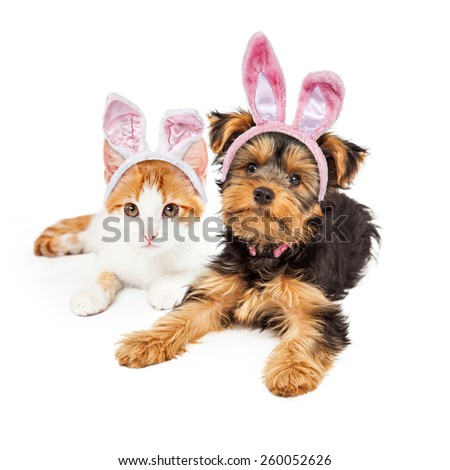 Cute puppy and kitten laying together wearing pink Easter Bunny ears - stock photo