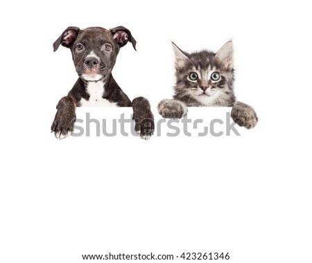 Cute puppy and kitten with paws hanging over a blank sign with room for text - stock photo