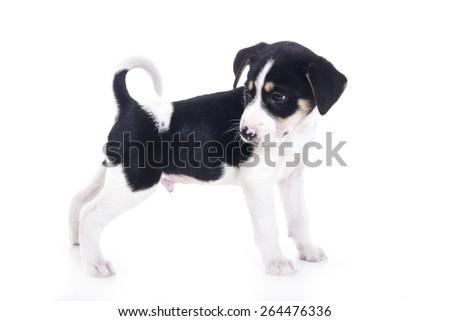 Cute puppy dog - stock photo