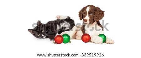 Cute puppy dog and kitten playing with Christmas ornaments - stock photo