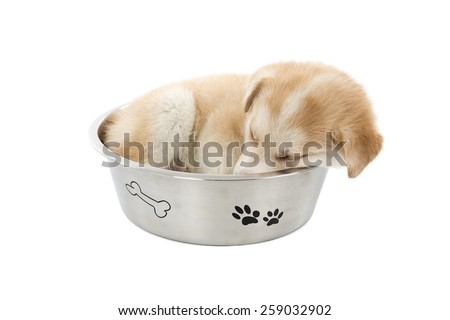 Cute puppy dog curled up in a bowl of food against a white background - stock photo
