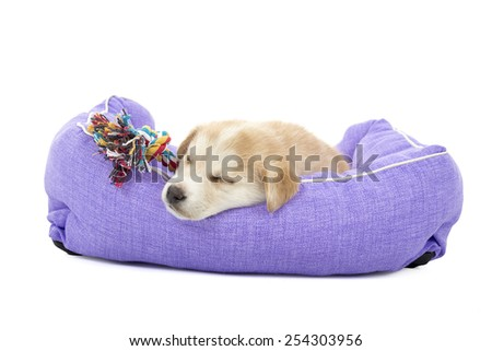 Cute puppy dog sleeping in its bed with its toy against a white background - stock photo