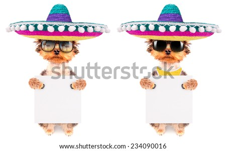 cute puppy dog wearing a mexican hat and holding white paper banner - stock photo
