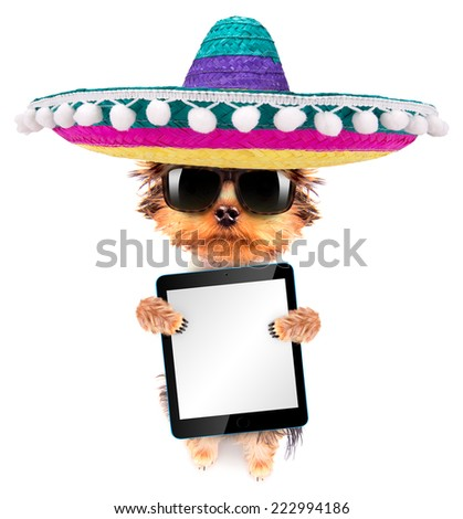 cute puppy dog wearing a mexican hat holding blank tablet pc - stock photo