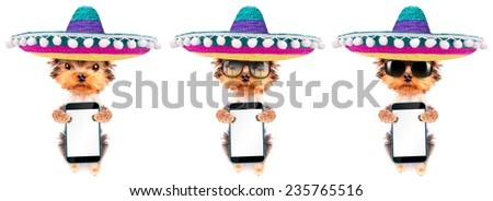 cute puppy dog wearing a mexican hat holding phone with empty white screen - stock photo