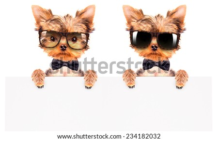 cute puppy dog wearing a neck bow and shades holding white paper banner - stock photo