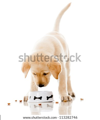Cute puppy eating dog food - isolated over a white background - stock photo