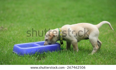 Cute puppy eating food at the yard - stock photo