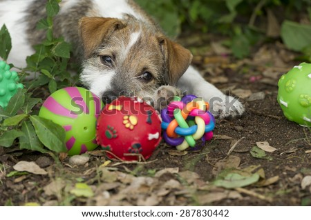 Cute puppy eyes with ball toys outdoors. - stock photo