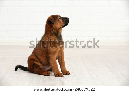 Cute puppy in room on brick wall background - stock photo